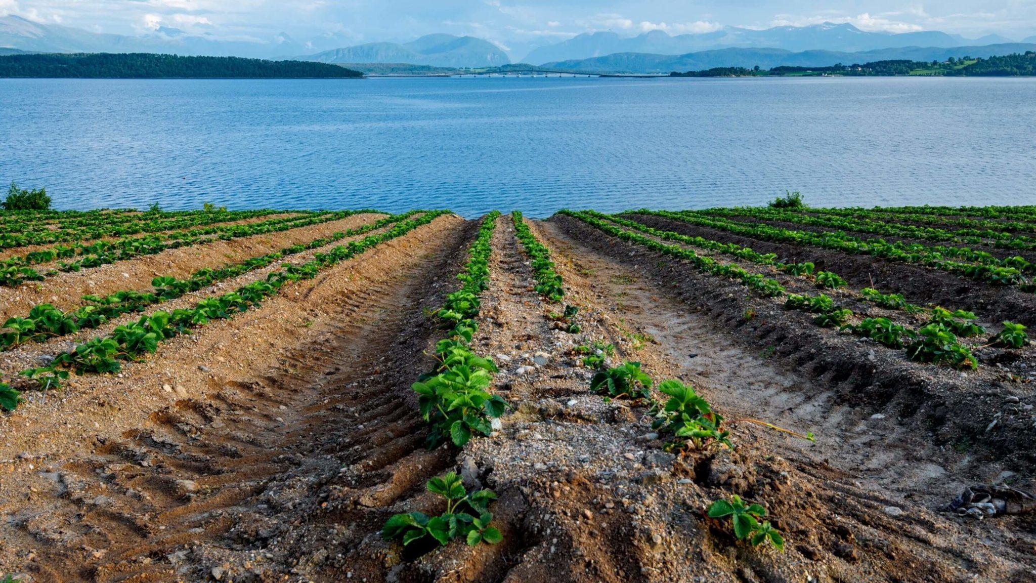 rolnictwo w Norwegii